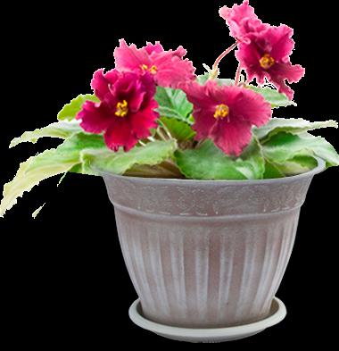 Где можно купить горшки под цветы по самым низким ценам какой экзотический подарок сделать мужчине приятно